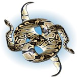 Red Tailed Boa