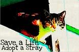 Kitten Art