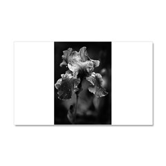Irises Car Magnet 20 x 12